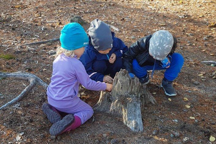 Lapsia leikkimässä kannon ympärillä.